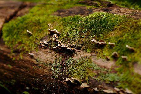 zdjĂŞcia Forest, 2009